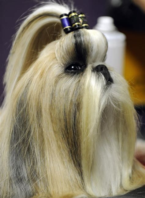 Dressed To The (Ca)nines: 9 Dog Hairstyles For The Stylish