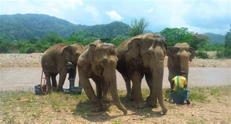 Visiting the Elephant Nature Park in Chiang Mai, Thailand!