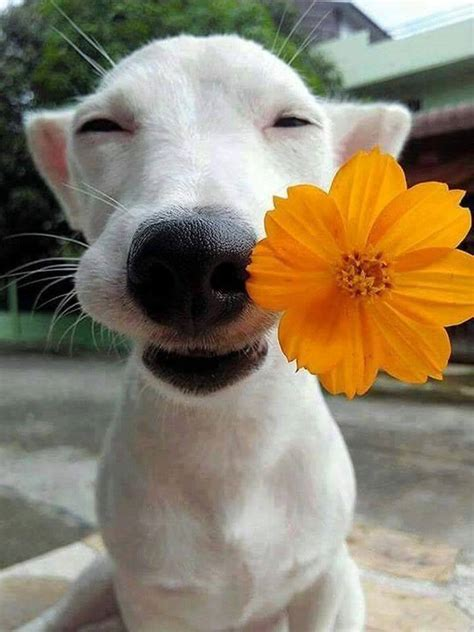 Dog With a Flower In It's Mouth | LuvBat