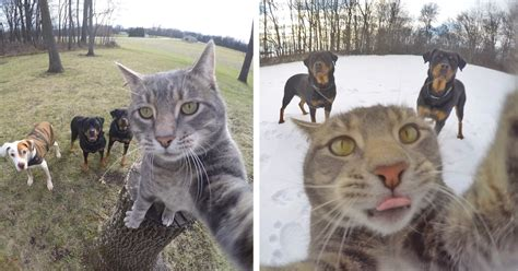 This Selfie Taking Cat Takes Better Selfies Than You