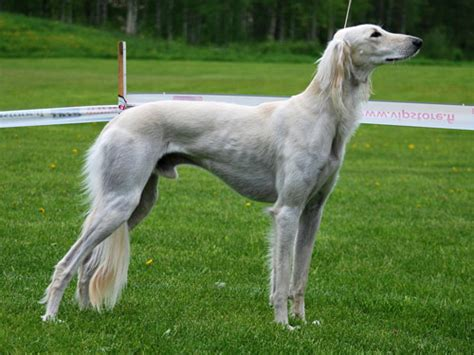 » 33 Exotic and unique dog breeds that you'd never come